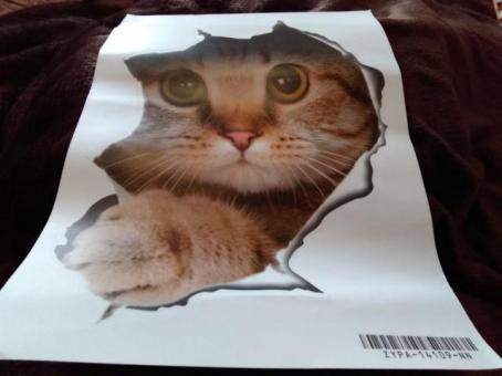 Cat breaking through the wall, wall sticker